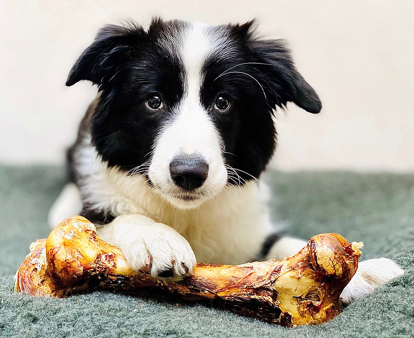 Ostrich Bones for Dogs